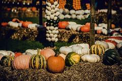 Array (Melissa Maples) Tags: ludwigsburg germany europe nikon d5100   nikkor afs 18200mm f3556g 18200mmf3556g vr residenzschloss palace blhendesbarock garden summer krbisausstellung pumpkins pumpkin festival sculpture art
