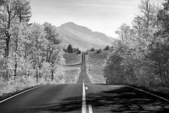 Road to the hills (PaulFerzoco) Tags: mountains desert trees infrared eastern seiarra nevada autumn road blacktop smooth
