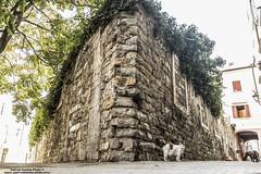 Cane & Gatto (-Andreyes- www.andreabastia-photo.com) Tags: strada cane gatto angolo casa abbandonata rudere abbandono via sguardo animali wwwandreabastiaphotocom