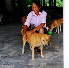 ,, Mama, No# 1, Pumpkin ,, (Jon in Thailand) Tags: junglejournalism no1wife mama pumpkin dog dogs k9 k9s chair thedogpalace thaismile woman thai female green pink jungle sitting sittingwoman sandals hands comforting nikon d300 nikkor 175528 street junglestylestreetphotography streetphotography littledoglaughedstories