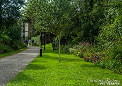 Green emotions (CKostova) Tags: nature park endcliffe village university sheffield southyorkshire england student life green outdoors trees flowers