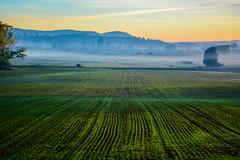 Misty Morning (mumstaxi42) Tags: tasmania deloraine sunrise fog