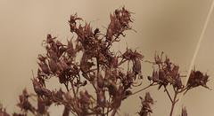 Couleur d'automne (mrieffly) Tags: couleursdautomne canoneos50d 100400issriel