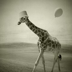 She was, you know, several balloons short of a full cluster (Janine Graf) Tags: bw bucket surrealism balloon surreal surrealist giraffe iphone mobilephotography janine1968 janinegraf thatsmydadsbucket aintnonetoobright iwonderifeddieredmaynelikesgiraffes