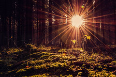 sun in forest 2 (S.B.Foto) Tags: sun forest sonne wald
