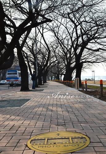 汝矣島櫻花_004.jpg