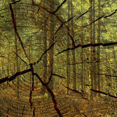 Wald - forest ( doro 51 ) Tags: wood texture forest photoshop squares holz wald quadrate