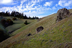 Mt. Tamalpais State Park, California - March 24, 2013 (glassjudah) Tags: california green clouds mttam judah lupine mttamalpais mttamalpaisstatepark judahglass photographybyjudahglass