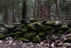 mossy wall (BrandonLaw87) Tags: nature wall moss rocks mossy rockwall mossyrocks