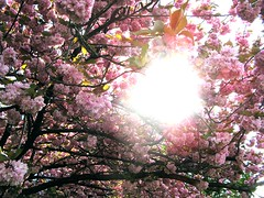 Bringt Preis und Ruhm dem Heiland dar (amras_de) Tags: flower primavera fleur spring flor jar blomma prima blume fiore lente blte blomst printemps vor tavasz virg ver frhling lore ware vr bloem jaro blm wiosna iek floro kwiat flos forr kevad ciuri primavara pavasaris kevt udaberri kvet kukka cvijet flouer ilkbahar blth cvet zieds is proljece printempo earrach floare pomlad blome iedas frijoer