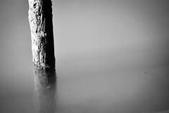 Silence (Channed) Tags: blackandwhite nederland zuidholland rhoon flickrfriday