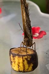 IMG_4601 (Lightcatcher66) Tags: florafauna makros blütenundpflanzen lightcatcher66