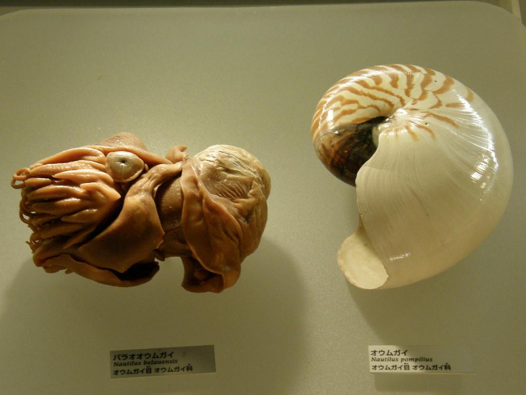 Nautilus Pompilius - Атлантида