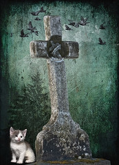 Kitten at the Cemetery (jta1950) Tags: pet pets cute texture cemetery grave birds animal cat kitten feline chat cross tomb adorable gravestone vignette tone cimetiere kristenfrankart