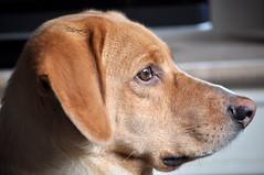 (Ese P) Tags: dog animal amigo can perro mestizo