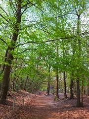 20130505_172153 (MelisaTG) Tags: cameraphone trees woods urbanwoods greenleafs