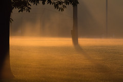 Morning fog (David G Ruth) Tags: park morning st nikon ky louisville seneca matthews d3200