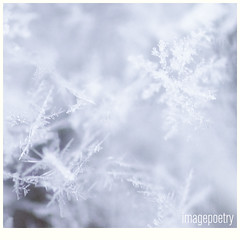 018 (imagepoetry) Tags: winter white snow cold macro ice weather snowflakes sony sigma flakes 105mm a65 imagepoetry sonyalpha