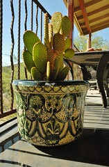 20130523 New Bunny Ears Cactus and Talavera Pot on the Porch (lasertrimman) Tags: new cactus bunny ears pot pear talavera prickly talavara 20130523