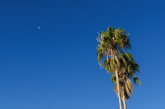 Moon and Tree (mverdon) Tags: moon tree nikon australia palm perth d7000
