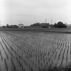 Paddy field (odeleapple) Tags: mamiya c330 mamiyasekor 65mm neopan100acros film bw paddy house