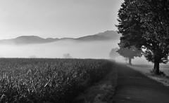Adrian Vesa Photography (adr.vesa) Tags: bw blackwhite gog fog mist nabel road way path trees corn morning serene hills mountains