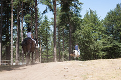 5D_IMG_6598 (Jeroen Kransen) Tags: bulgarije bulgaria    horse horseback equestrian horseriding paardrijden paardrit rodopen rhodopes