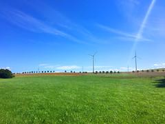 Wiese mit blauem Himmel (10.000 Schritte) Tags: wunderschn wiese gras wolken blau himmel grn windrder windrad bume baum allee