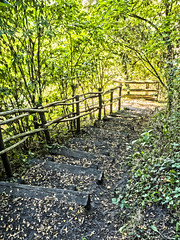 Stairs (enneafive) Tags: walking trail borgloon limburg olympus omd em5 stair light golden