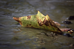 Sadness Season (oskaybatur) Tags: september eyll fall 2016 oskaybatur closeup dof pentaxk3 ricoh pentaxart justpentax nature autumn sonbahar orlu trakya glba smcpentaxda55300mmf458ed autumncolors