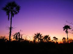 African Sunset (inthestride) Tags: sunset africa tree botswana nata silhouette camp dusk outdoor plant palm sky inthestride flscher