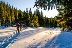 evening (oleksandr.mazur) Tags: activity adventure afternoon day dusk forest frost hiking landscape outdoor path people rays shade shadows snow snowy sun sunlight sunset sunshine tourism tourist travel tree trekking vacation winter