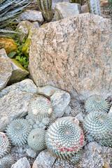 DSC_5370 (sergeysemendyaev) Tags: 2016 rio riodejaneiro brazil jardimbotanico botanicgarden     outdoor nature plants    cactuses  green  beauty nikon