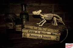 IMG_67781 (Joanne 1967 (SIMPLY PHOTOGRAPHY)) Tags: unlimitedphotos joanneshaw simplyphotography rat skeleton witchs books potions allthebest