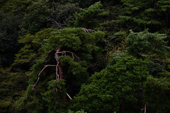 Lighting tree (alexander_nachev) Tags: japan travel trip abstract simple art fine green nature architecture hirano mist empty emptiness city busy forest trees textures foggy fog lake fuji fujisan mount japanese order