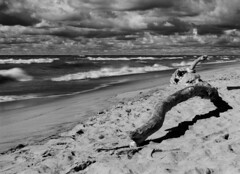 Adrift on the beach (pabs35) Tags: grandmerestatepark michigan lakemichigan sand dune lake film believeinfilm mediumformat 120 ilford fp4 fp4plus ilfordfp4plus mamiya m645 1000s mamiyam6451000s redfilter clouds water driftwood beach waves