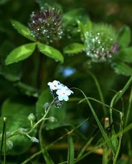 drops of dew 1 (dibattista) Tags: campigna emilia romagna forest bosco rugiada dew drops gocce