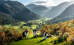 Border Collie Delight (JJFET) Tags: border collie dog mountain hill seathwaite borrowdale dogs