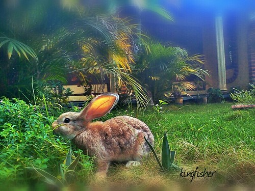 Bunny in front of my house