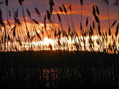 Be Still (Barbacci) Tags: sunset sea ny newyork nature grass outdoors evening harbor twilight sundown dusk shoreline longisland winner coastline nightfall coldspringharbor 15challengeswinner friendlychallengeswinner thechallengefactory thechallengefactorywinner