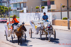 Vina Del Mar Mar 2013-42 (Ted's photos for you) Tags: chile travel horses valparaiso carriage streetscene buggy vinadelmar valparaisochile horsecarriage horsebuggy valparaisosantiago tedsphotos