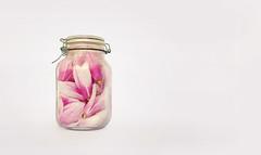 Conserva_L1_13 ([capocasa.stefano]^2) Tags: primavera rosa fiori anima bianco amore chiuso bello conserva sofferenza spirito barattolo