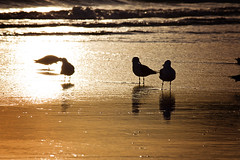 Seagulls (Tasha Chawner) Tags: ocean sea seagulls lighthouse beach silhouette dawn dusk australia byronbay tashachawner