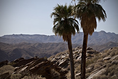 Indian Canyons 03 (dleany) Tags: palmsprings coachellavalley southerncalifornia indiancanyons 2470mmf28l 5dmkii