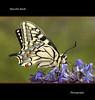 Macaone (Marcello Bardi) Tags: butterfly ngc npc photomix photosandcalendar natureselegantshots panoramafotografico flickrstruereflection5 flickrstruereflection6 bestevercompetitiongroup rememberthatmomentlevel6 onlythebestofflickr ƹ̵̡ӝ̵̨̄ʒeverythingwithwingsƹ̵̡ӝ̵̨̄ʒ ♥macroelitecontestwinner♥