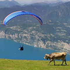 Paraglider between the greenery of Mount Baldo, blue lake and cows (B℮n) Tags: camera blue summer sky italy panorama mountain lake holiday alps smile car cheese trekking garden walking polaroid milk italian garda rocks europe strada mediterranean italia photographer lift view cows hiking path altitude flight cable liftoff primo panoramica tandem paragliding elevated peaks paraglider viewpoint fiore higher topf100 walkers mont thermal climate breathtaking malcesine paragliders gardameer baldo 100faves panview 2218m
