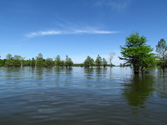 Lowcountry Unfiltered - Lake Marion Ghost Town Paddle - April 2013 (284) (greenkayak73) Tags: friends beagle nature america fun lucy southcarolina adventure kayaking ghosttown mrrussell riverdog lakemarion greenkayak73 randomconnections photopaddling lowcountryunfiltered nitrorev rockscemetery johnatgcc