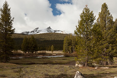 unicorn peak from tuolumne meadows (ohikura) Tags: california ca yosemitenationalpark tuolumnemeadows sodasprings tiogaroad unicornpeak glenaulintrail