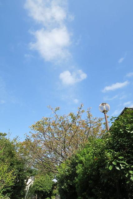桜のプロムナード
