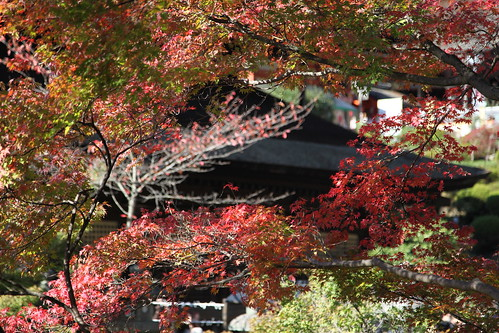 秋の清水さん